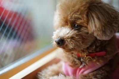 soku_33902.jpg :: 動物 ペット 犬