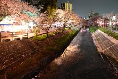 soku_33967.jpg :: 植物 花 桜 サクラ 夜桜 満開