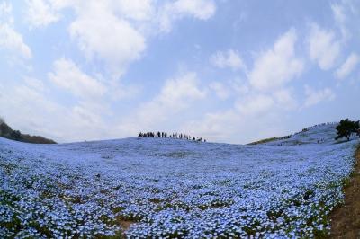 soku_33971.jpg :: 風景 自然 草原 花畑