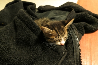 soku_34022.jpg :: 動物 哺乳類 猫 ネコ 子猫 初日 モコちゃん