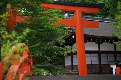 soku_34073.jpg :: 建築 建造物 神社 鳥居