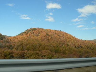 soku_34074.jpg :: のね 風景 自然 森林 紅葉林