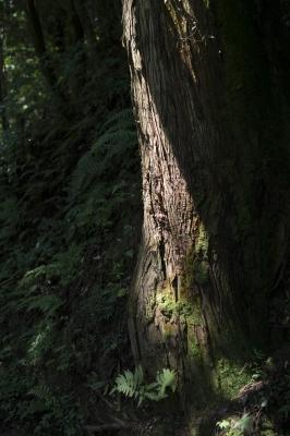 soku_34115.jpg :: 風景 自然 樹木