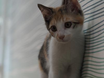 soku_34135.jpg :: 動物 哺乳類 猫 ネコ 子猫