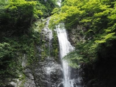 soku_34173.jpg :: 風景 自然 滝 新緑
