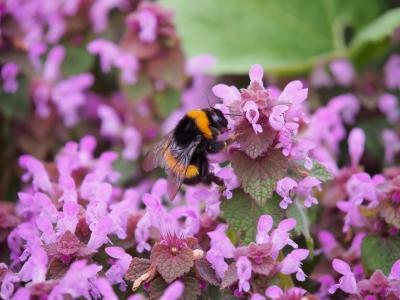 soku_34199.jpg :: 動物 虫 昆虫 蜂 ハチ マクロ