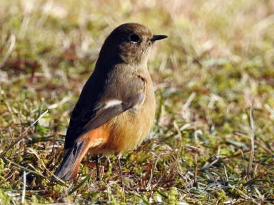 soku_34210.jpg :: 動物 鳥 野鳥 自然の鳥