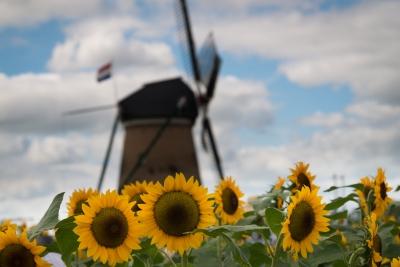 soku_34261.jpg :: 風景 街並み 郊外の風景 外国 植物 花 向日葵 ヒマワリ 建築 建造物 風車