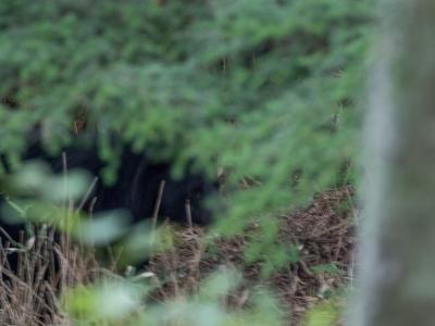soku_34279.jpg :: 動物 哺乳類 熊 クマ