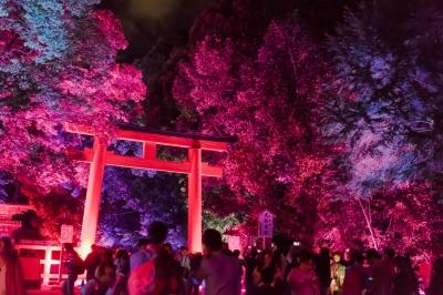 soku_34339.jpg :: 建築 建造物 神社 鳥居 夜景 色 光 ライトアップ