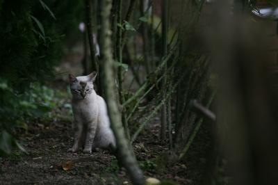 soku_34345.jpg :: 動物 哺乳類 猫 ネコ 野良猫 子猫