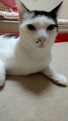 soku_34399.jpg :: うちのみゃ~ちゃん 動物 哺乳類 猫 ネコ