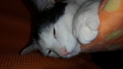 soku_34419.jpg :: みゃーちゃん 動物 哺乳類 猫 ネコ