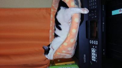 soku_34420.jpg :: みゃーちゃん 動物 哺乳類 猫 ネコ