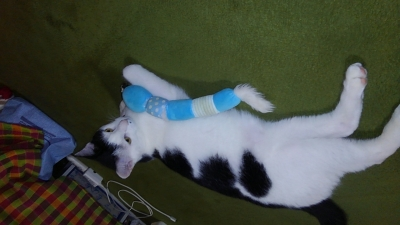 soku_34464.jpg :: みーちゃん おもちゃ 動物 哺乳類 猫 ネコ