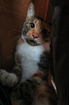 soku_34511.jpg :: 動物 哺乳類 猫 ネコ 野良猫 今朝方迷い込んだノラ猫 ものすごく警戒しています