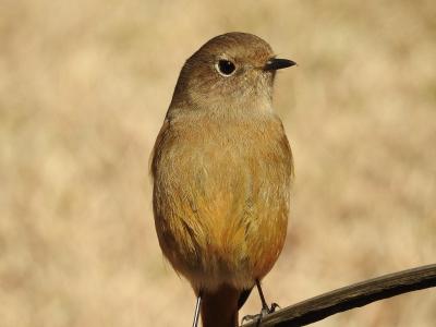 soku_34512.jpg :: 動物 鳥 野鳥 自然の鳥 未記入鳥