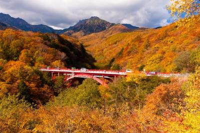 soku_34522.jpg :: 風景 自然 森林 紅葉林 建築 建造物 橋