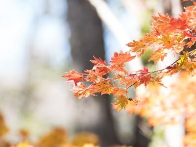 soku_34553.jpg :: 植物 樹木 紅葉 ハイキー