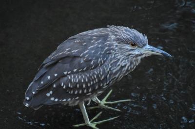 soku_34630.jpg :: 動物 鳥 野鳥 自然の鳥 未記入鳥