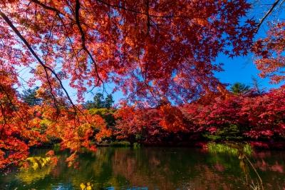 soku_34653.jpg :: 風景 自然 紅葉 秋 雲場池 水面 水鏡
