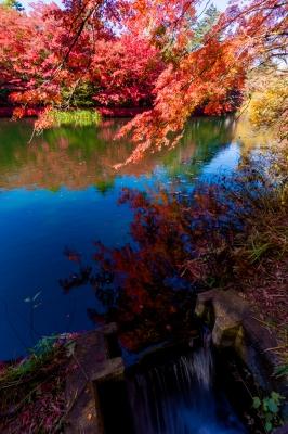 soku_34654.jpg :: 風景 自然 紅葉 秋 雲場池 水面 水鏡