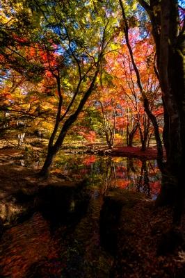 soku_34655.jpg :: 風景 自然 紅葉 秋 雲場池 水面 水鏡