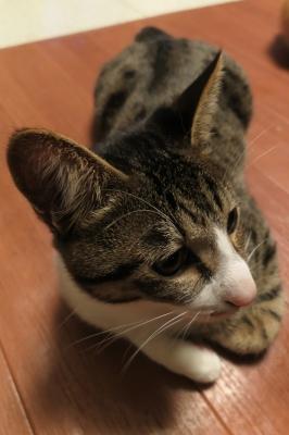 soku_34659.jpg :: 動物 哺乳類 猫 ネコ モコ 眠い