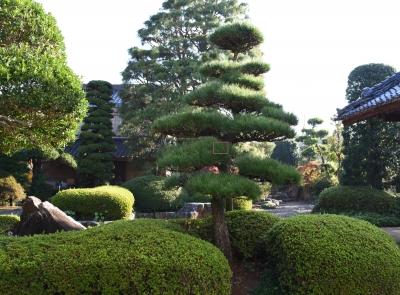 soku_34671.jpg :: 和 和風 和風庭園