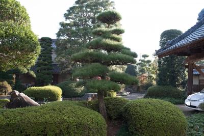 soku_34672.jpg :: 和 和風 和風庭園