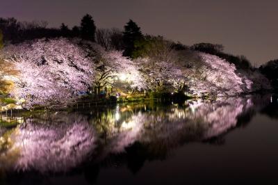 soku_34678.jpg :: 植物 花 桜 サクラ 夜桜 満開 風景 自然 水面 水鏡