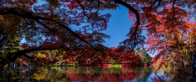 soku_34679.jpg :: 雲場池 秋 パノラマ 風景 自然 紅葉 水面 水鏡