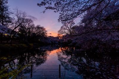 soku_34682.jpg :: 井の頭公園 風景 自然 空 夕日 夕焼け 日没 水鏡