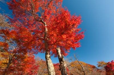 soku_34683.jpg :: 碓氷 秋 風景 自然 紅葉 赤い紅葉