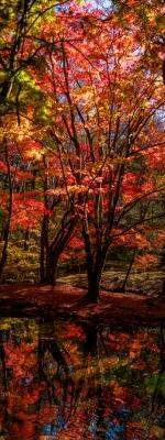 soku_34687.jpg :: 雲場池 秋 風景 自然 紅葉 赤い紅葉 水面 水鏡