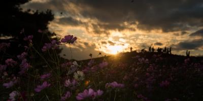 soku_34689.jpg :: 風景 自然 空 夕日 夕焼け 日没