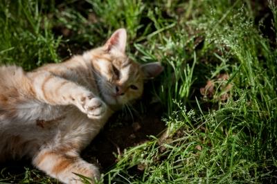 soku_34698.jpg :: 動物 哺乳類 猫 ネコ