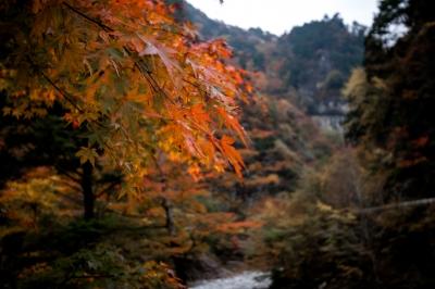 soku_34708.jpg :: 風景 自然 紅葉