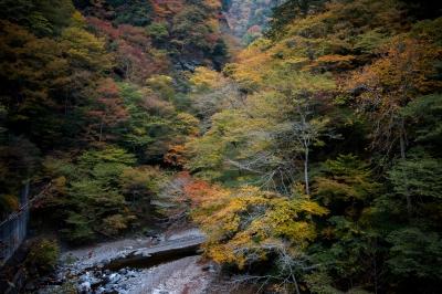 soku_34710.jpg :: 風景 自然 紅葉 黄色い紅葉