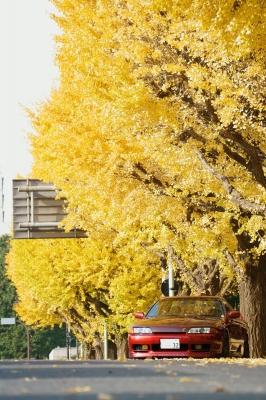 soku_34729.jpg :: 写真部@車板 4コマ目 風景 自然 紅葉 黄色い紅葉 風景 郊外 車 ドライブ