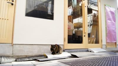 soku_34760.jpg :: 街角のスナップ 動物 哺乳類 猫 ネコ
