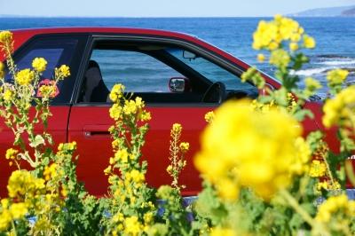 soku_34872.jpg :: 風景 郊外 車 ドライブ 菜の花 GTR