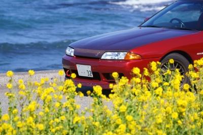 soku_34874.jpg :: 風景 郊外 車 ドライブ 菜の花 GTR