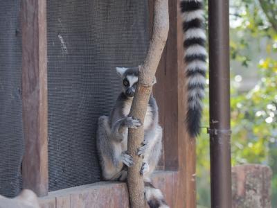 soku_34939.jpg :: 動物 哺乳類 猿 サル