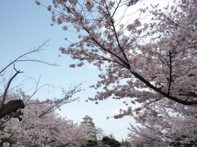 soku_34954.jpg :: 植物 花 桜 サクラ 満開 建築 建造物 城