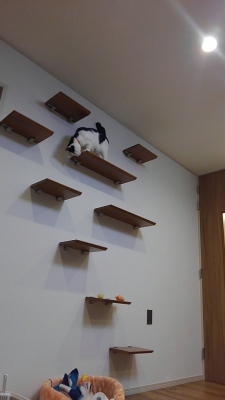 soku_34982.jpg :: 動物 哺乳類 猫 ネコ みゃーちゃん 引越し