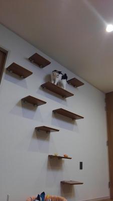 soku_34983.jpg :: 動物 哺乳類 猫 ネコ みゃーちゃん 引越し
