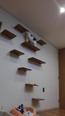 soku_34984.jpg :: 動物 哺乳類 猫 ネコ みゃーちゃん 引越し
