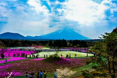 soku_34993.jpg :: 山梨 富士山芝桜まつり