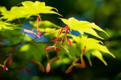 soku_35013.jpg :: 植物 花 黄色い花